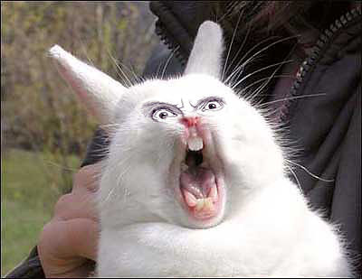 Screaming%20bunny